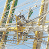 Tallship Guided Tour (ALEX II) added by Monica